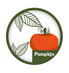 Pumpkin vegetable fresh healthy label vector