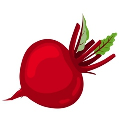 Red beetroot vector