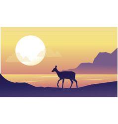 deer on the riverbank scenery at sunrise vector image