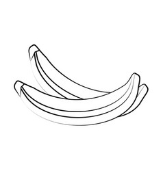 sweet bananas fruit vector image