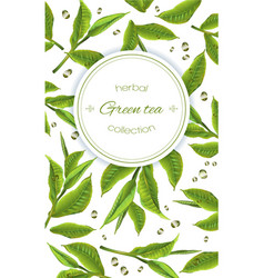 Green tea banner vector image