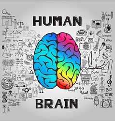 Human brain infographic vector