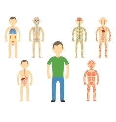 Cartoon man body anatomy vector