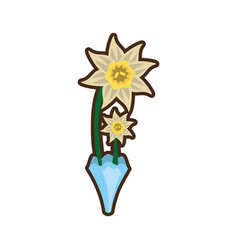 Bouquet daffodil flower image vector