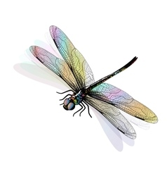 dragonfly isolated and colorful EPS10 vector image vector image