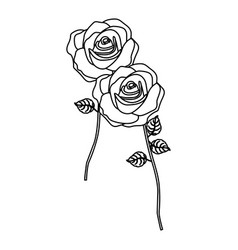 Silhouette roses with stem and leaves floral vector