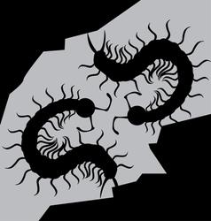 centipede vector image