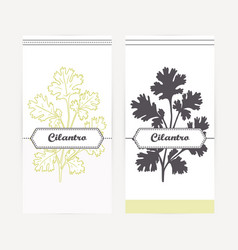 Cilantro in outline and silhouette style vector