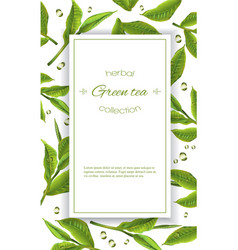 Green tea banner vector