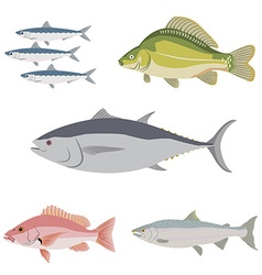 Set of difference kind of fish river and sea food vector
