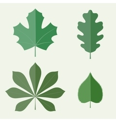 Flat leaves vector image vector image
