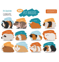 Guinea pig breeds icon set flat style isolated on vector