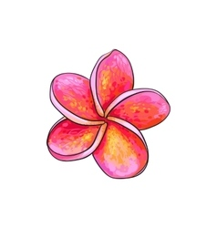 Single pink plumeria frangipani tropical flower vector image