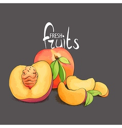 Juicy and fragrant peach vector