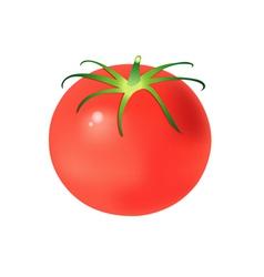 Tasty tomato vector