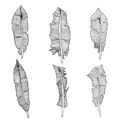 Set of feathers vector