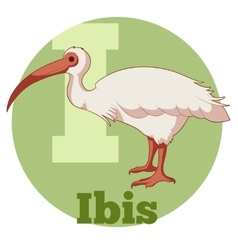 Abc cartoon ibis vector