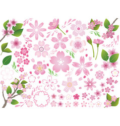 a set of assorted cherry flower elements vector image vector image