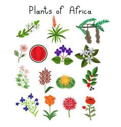 Plants of africa vector