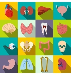 Internal organs flat icons vector
