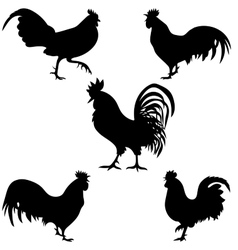 rooster silhouettes on the white background vector image vector image