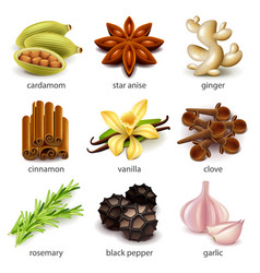 species and herbs icons set vector image