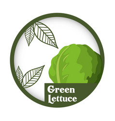 green lettuce vegetable fresh healthy label vector image