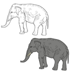 Sketch large African elephant on a white vector image vector image