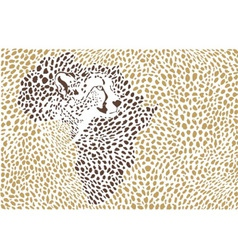 Background of the African cheetah vector image