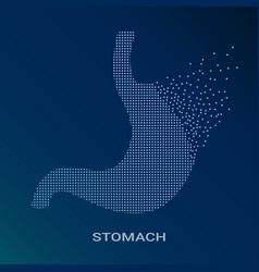 abstract of human stomach on vector image vector image