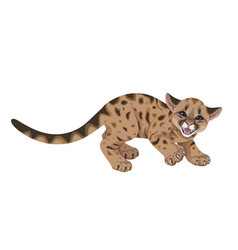 Angry cougar cub isolated vector