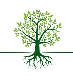 Green Tree and Roots vector image