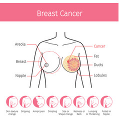 Of female human breast anatomy vector