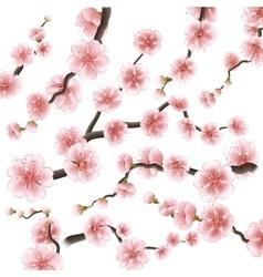 Set of sakura japan cherry branch eps 10 vector