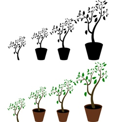 indoor plant vector image