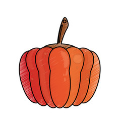 drawing pumpkin food nutrition vector image vector image