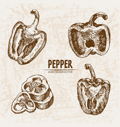 Digital detailed line art pepper vegetable vector