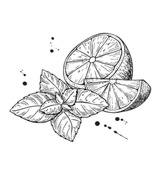 lemons and mint Isolated on white vector image vector image