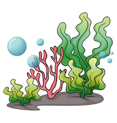 Seaweeds under the sea vector