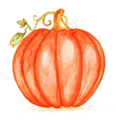 Watercolor orange pumpkin vector