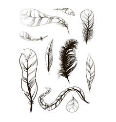 Set of sketch plumage vector