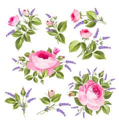 vintage rose set vector image