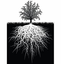 tree roots vector image vector image