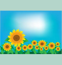 A field of sunflowers and a clear sky vector