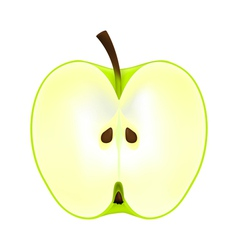 half an apple on a white background vector image vector image