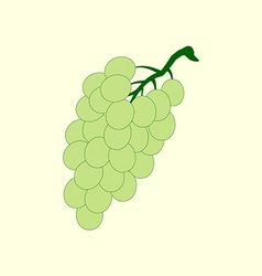 Grapes fruit icon vector