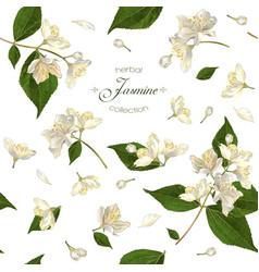 Jasmine seamless pattern vector