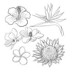 Tropical flowers - hibiscus protea plumeria vector
