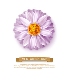 Pink flower isolated on white background element vector