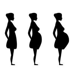 Pregnant women in the three trimesters vector